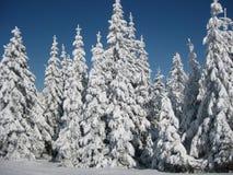 χιονώδες δέντρο Στοκ Φωτογραφία