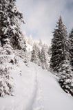Χιονώδες ίχνος βουνών Στοκ Εικόνες
