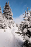 Χιονώδες ίχνος βουνών Στοκ φωτογραφία με δικαίωμα ελεύθερης χρήσης
