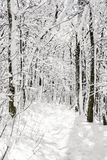 Χιονώδες δασικό, εποχιακό φυσικό άσπρο τοπίο Στοκ Εικόνες