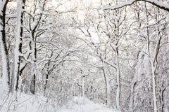 Χιονώδες δασικό, εποχιακό φυσικό άσπρο τοπίο Στοκ Φωτογραφίες