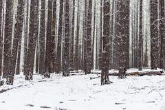 Χιονώδες δασικό υπόβαθρο Στοκ φωτογραφίες με δικαίωμα ελεύθερης χρήσης