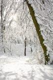 Χιονώδες δασικό, φυσικό άσπρο τοπίο Στοκ Φωτογραφία
