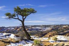 Χιονώδες βουνό ερήμων Στοκ φωτογραφίες με δικαίωμα ελεύθερης χρήσης