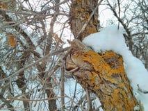 Χιονώδες βρύο στοκ φωτογραφίες