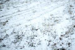Χιονώδες λιβάδι Στοκ Φωτογραφία