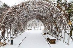 Χιονώδες πάρκο Στοκ Εικόνα