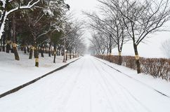 Χιονώδες πάρκο Στοκ Φωτογραφίες