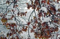 Χιονώδες υπόβαθρο δέντρων Στοκ Εικόνα