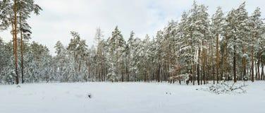 Χιονώδες χειμερινό δάσος Στοκ Εικόνες