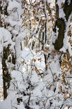 Χιονώδες χειμερινό δασικό, εποχιακό φυσικό τοπίο Στοκ Εικόνες