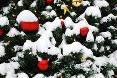 χιονώδες δέντρο Στοκ Εικόνες