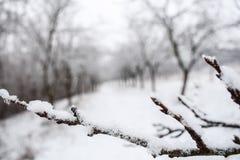 Χιονώδες brunch Στοκ Εικόνες