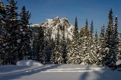 Χιονώδης αιχμή στο χειμερινό δάσος στοκ εικόνα με δικαίωμα ελεύθερης χρήσης