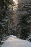 Χιονώδης δασικός δρόμος Στοκ φωτογραφία με δικαίωμα ελεύθερης χρήσης