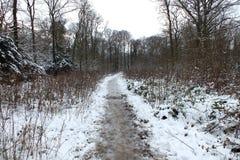 Χιονώδης δασώδης περιοχή Στοκ Φωτογραφία