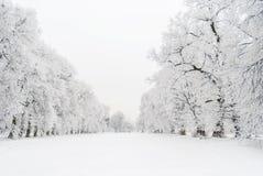 Χιονώδης αλέα στοκ εικόνες