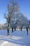 Χιονώδης αλέα Στοκ Εικόνα