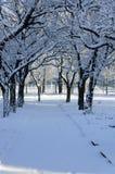 Χιονώδης αλέα Στοκ φωτογραφία με δικαίωμα ελεύθερης χρήσης