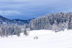 Χιονώδης βουνοπλαγιά των δέντρων πεύκων Στοκ Εικόνες