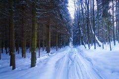 Χιονώδης βρυχηθμός Στοκ Εικόνες