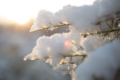 χιονώδης θαυμάσιος Στοκ εικόνες με δικαίωμα ελεύθερης χρήσης