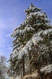 Χιονώδης ιστορία Στοκ Φωτογραφίες
