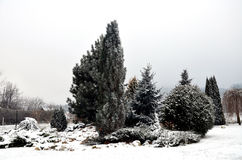 Χιονώδης κήπος με το δέντρο Στοκ φωτογραφία με δικαίωμα ελεύθερης χρήσης