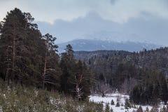 Χιονώδης κομψός δασικός και νεφελώδης ουρανός Στοκ Φωτογραφίες