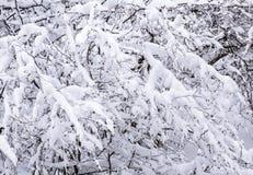 Χιονώδης κλάδος δέντρων Στοκ φωτογραφίες με δικαίωμα ελεύθερης χρήσης