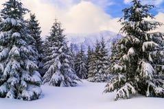 Χιονώδης κλίση Στοκ εικόνες με δικαίωμα ελεύθερης χρήσης