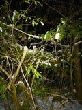 Χιονώδης νύχτα Στοκ Εικόνες