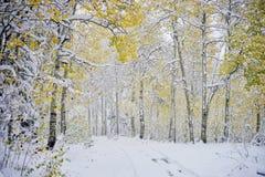 Χιονώδης πορεία λιγότερο που ταξιδεύουν Στοκ φωτογραφία με δικαίωμα ελεύθερης χρήσης