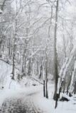 Χιονώδης πορεία μέσω ενός πιό forrest Στοκ Εικόνα