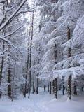 Χιονώδης πορεία μέσω του δάσους Στοκ Εικόνες