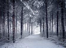 Χιονώδης δρόμος μέσω του κρύου χειμερινού δάσους Στοκ Εικόνα