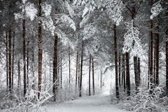 Χιονώδης δρόμος μέσω του χειμερινού δάσους Στοκ φωτογραφία με δικαίωμα ελεύθερης χρήσης