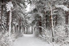 Χιονώδης δρόμος μέσω του χειμερινού δάσους Στοκ φωτογραφίες με δικαίωμα ελεύθερης χρήσης
