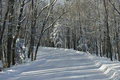 Χιονώδης δρόμος που πηγαίνει επάνω στο κρατικό πάρκο βουνών πλευρών Στοκ φωτογραφία με δικαίωμα ελεύθερης χρήσης