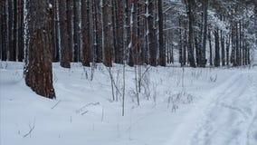 Χιονώδης δρόμος στο δασικό βρόχο πεύκων pan φιλμ μικρού μήκους