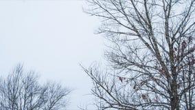 Χιονώδης δρόμος στο μικτό δασικό βρόχο pan απόθεμα βίντεο