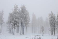 Χιονώδης χειμερινή δασική σκηνή με την ομίχλη και την υδρονέφωση Στοκ εικόνα με δικαίωμα ελεύθερης χρήσης