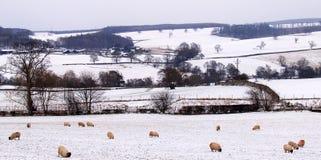 Χιονώδης χειμερινή ημέρα στην αγροτική Αγγλία στοκ εικόνες
