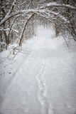 Χιονώδης χειμερινή πορεία στο δάσος στοκ φωτογραφία με δικαίωμα ελεύθερης χρήσης