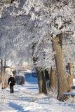 χιονώδης χειμώνας δέντρων πάρκων φύσης Ιανουαρίου παγετού ημέρας Στοκ φωτογραφίες με δικαίωμα ελεύθερης χρήσης
