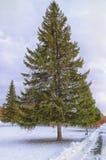 χιονώδης χειμώνας δέντρων πάρκων φύσης Ιανουαρίου παγετού ημέρας Στοκ Φωτογραφία