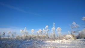 χιονώδης χειμώνας δέντρων πάρκων φύσης Ιανουαρίου παγετού ημέρας Στοκ εικόνες με δικαίωμα ελεύθερης χρήσης