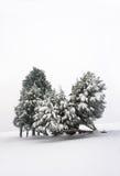 χιονώδης χειμώνας δέντρων τ Στοκ Φωτογραφία