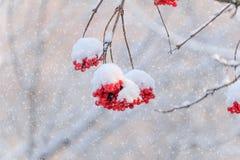 χιονώδης χειμώνας κήπων σχεδίου ομορφιάς ανασκόπησής σας Στοκ Εικόνες