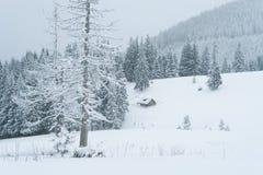 Χιονώδης χειμώνας σε ένα δάσος βουνών Στοκ Φωτογραφίες